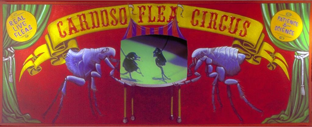 1998_cardoso flea circus_new museum NY_04