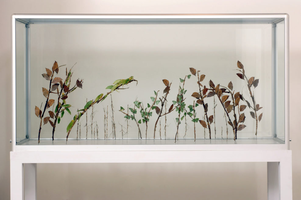 A GARDEN OF INSECTS THAT LOOKS LIKE PLANTS