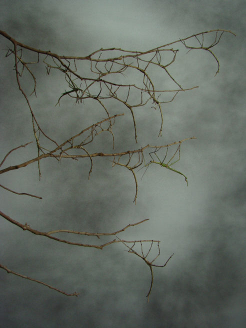 LEAVES, STICKS AND BRANCHES