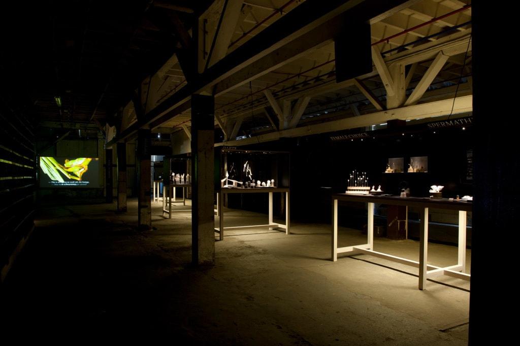 MUSEUM OF COPULATORY ORGANS (MoCO)