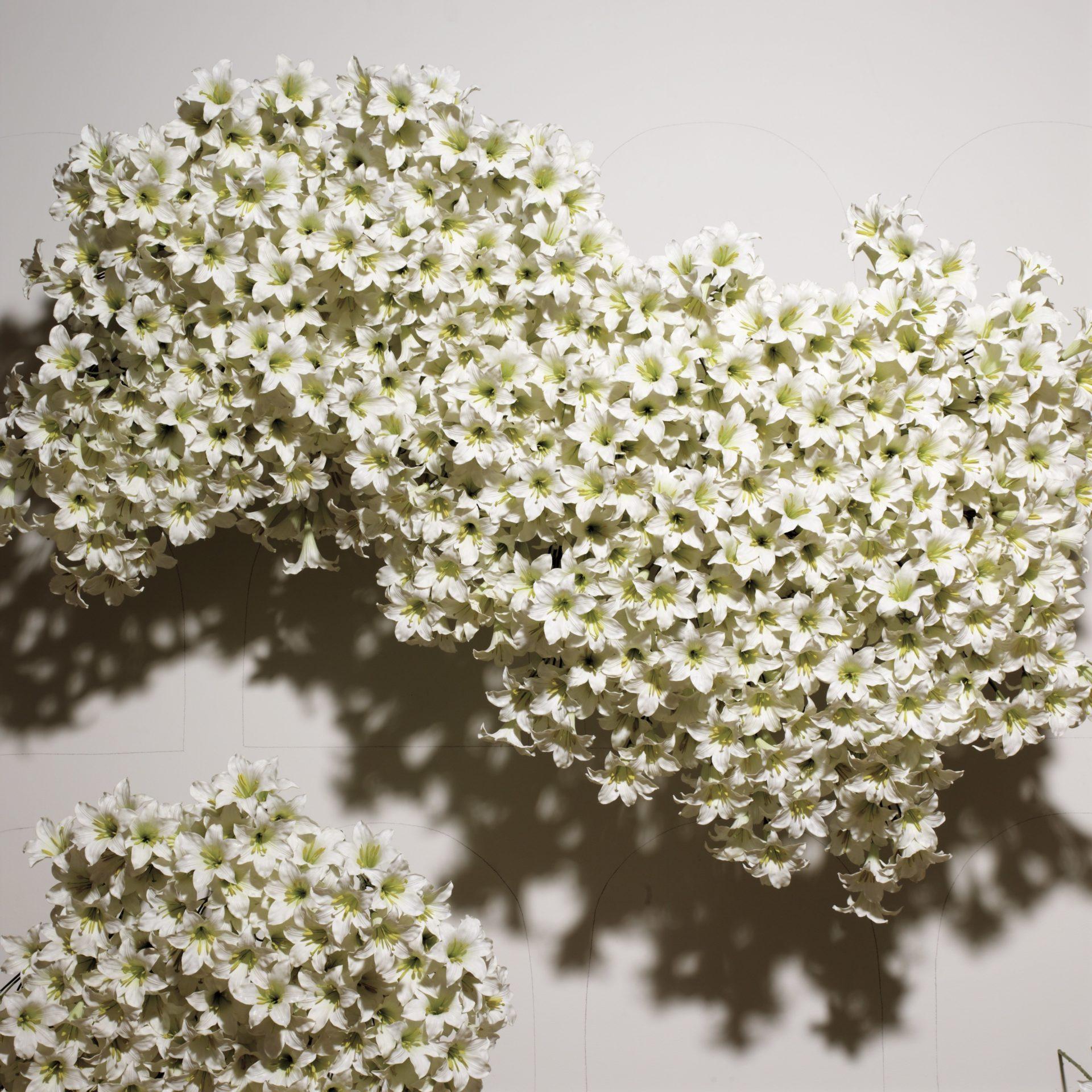 flowers-073_lge