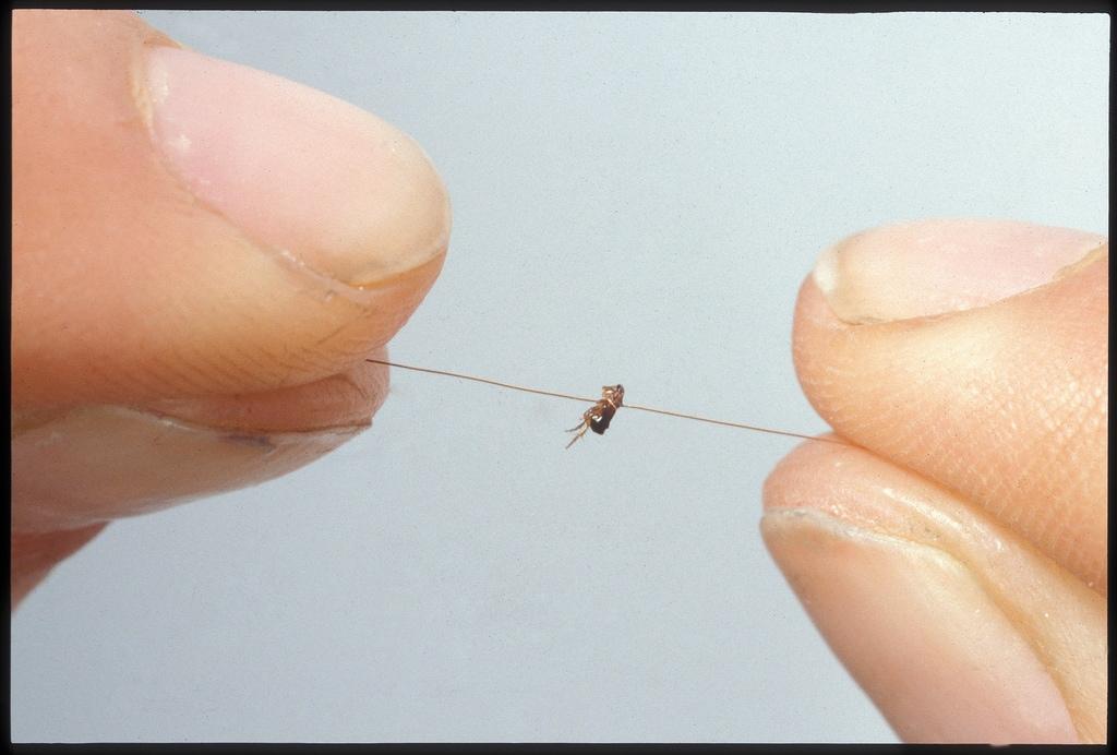1996_cardoso flea circus_exploratorium05