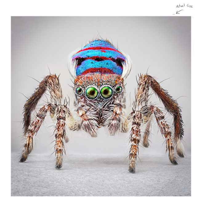 SPIDERS OF PARADISE