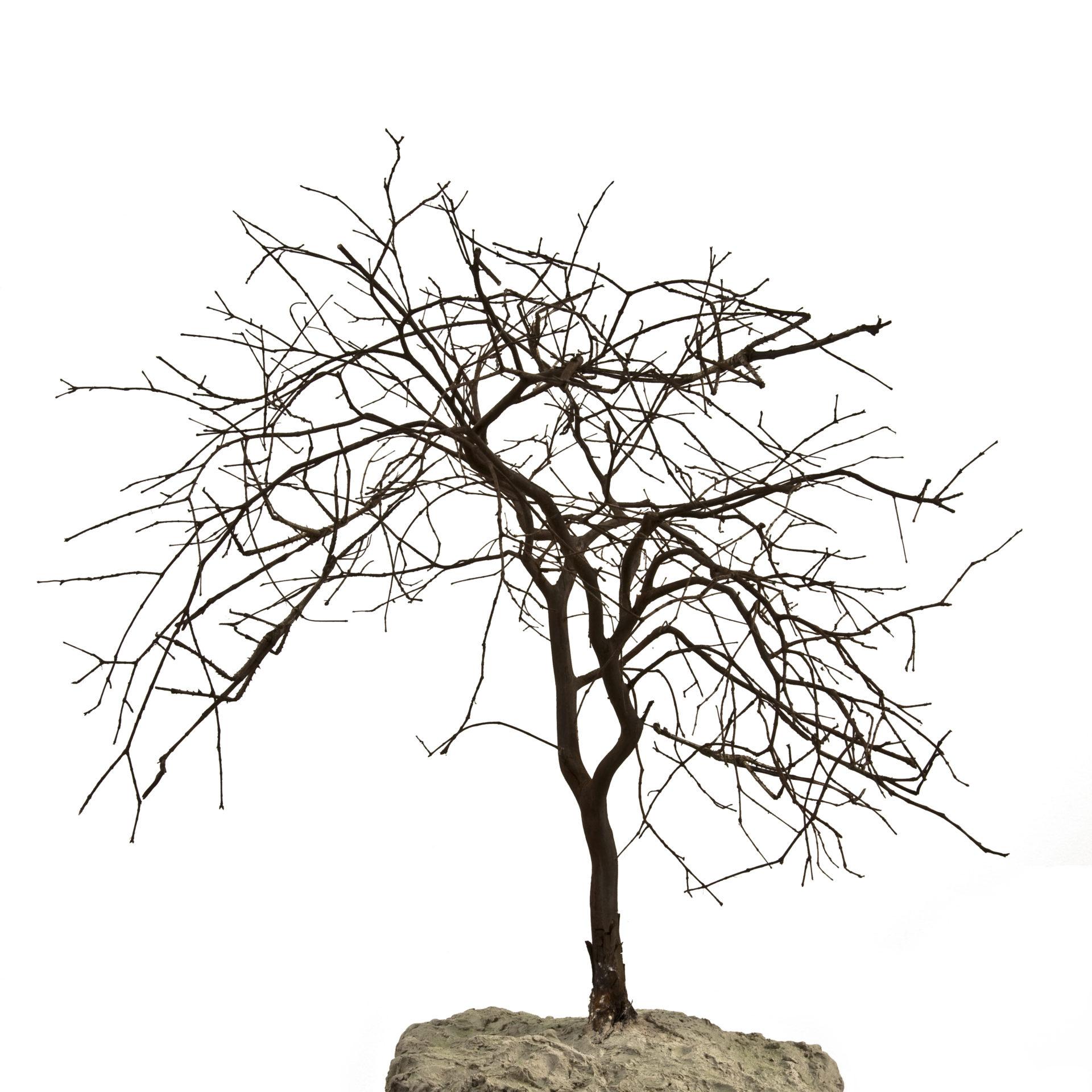 IMG_1035 dead tree