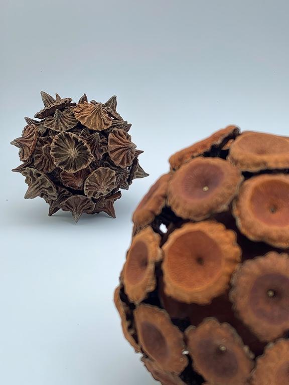 2021 Gumnut Sphere ECCICS.5