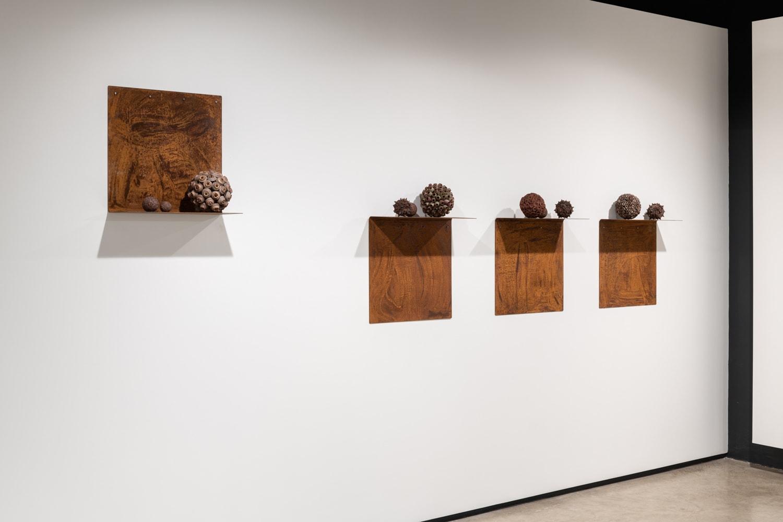 Gumnut spheres on artist made shelves 1, 2, 3, 4